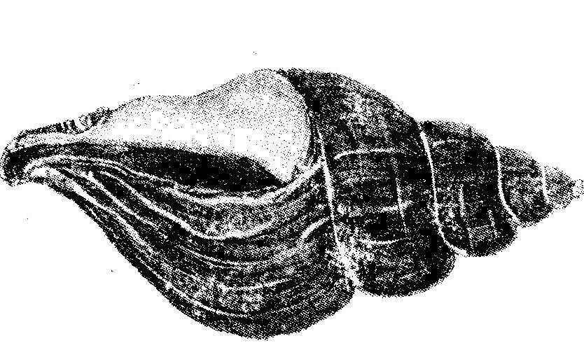 Das Logo der Hospizgruppe - eine geschlossene Muschel.