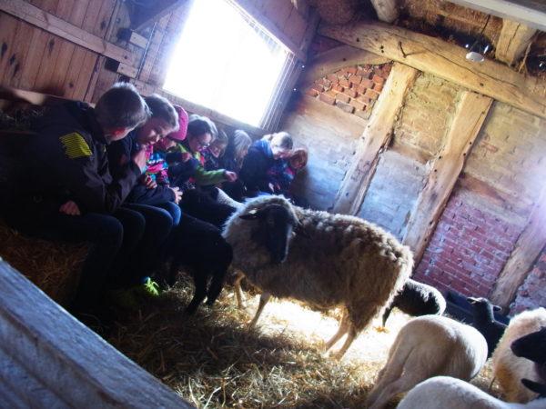 Die Kinder sitzen mit den Teamern der Kinderkirche im Schafsstall auf Heuballen und streicheln Lämmer.